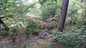 Balade dans le parc de l'Ermitage du Rebberg