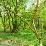 forêt du bas rhin